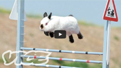 Cute Bunny Jumping Competition