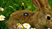 Little Bunny Foo Foo Song