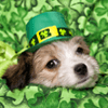 St. Patrick's Day Puppy Jigsaw Puzzle