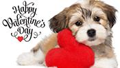 Valentine Puppy Jigsaw