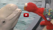 Sesame Street: Elmo and Whale: Love