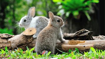Bunnies Jigsaw Puzzle