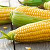 Corn Jigsaw Puzzle