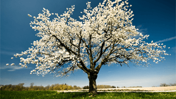 Spring Jigsaw Puzzle Free Online Games At Primarygames
