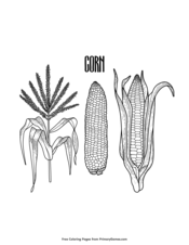 Phases of Corn