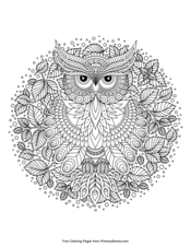 Zentangle Owl With Leaves