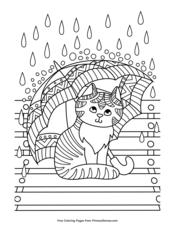 Kitten with Umbrella in the Rain